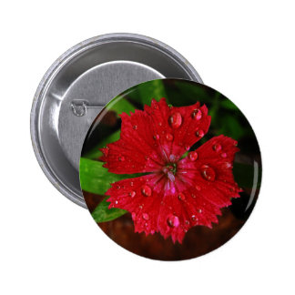 Red Dianthus With Raindrops Pinback Button