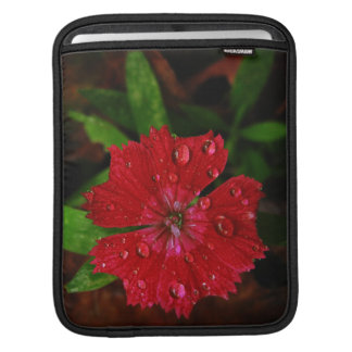 Red Dianthus With Raindrops Sleeve For iPads
