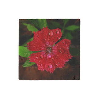 Red Dianthus With Raindrops Stone Magnet