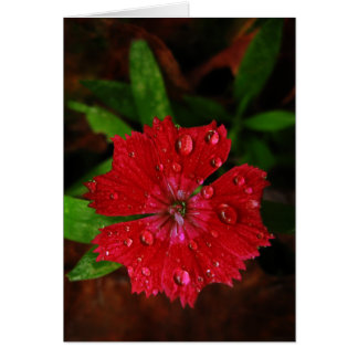 Red Dianthus With Raindrops Thank You Card