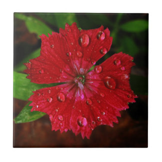 Red Dianthus With Raindrops Tile