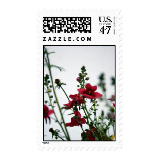 Red Diascia - Floral Photography Postage