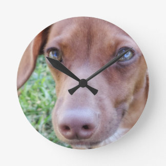 Red Dilute Dachshund Puppy Round Clock