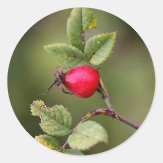 Red Dog Rose Fruit Classic Round Sticker