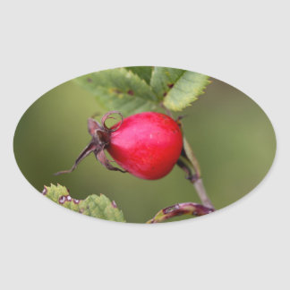 Red Dog Rose Fruit Oval Sticker