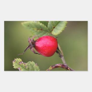 Red Dog Rose Fruit Rectangular Sticker