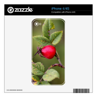Red Dog Rose Fruit Skin For iPhone 4S