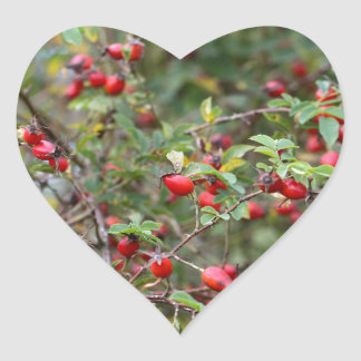 Red Dog Rose Fruits Heart Sticker