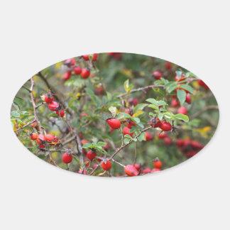 Red Dog Rose Fruits Oval Sticker