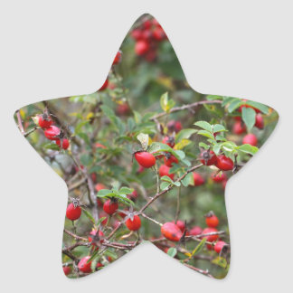 Red Dog Rose Fruits Star Sticker