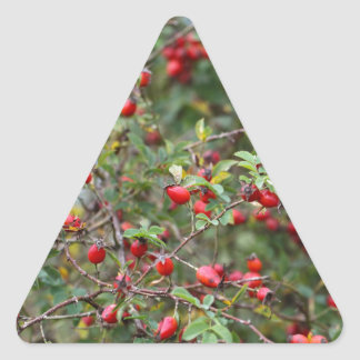 Red Dog Rose Fruits Triangle Sticker