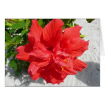 Red Double Hibiscus Flower Card