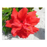 Red Double Hibiscus Flower Photo Print