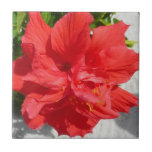 Red Double Hibiscus Flower Tile