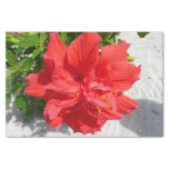 Red Double Hibiscus Flower Tissue Paper