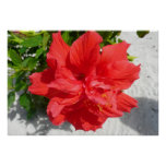 Red Double Hibiscus Print