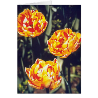 Red Double late tulips Nizza flowers Greeting Card