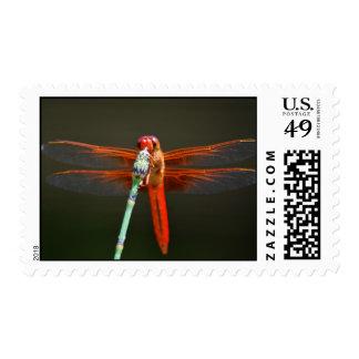 red dragon flyz postage