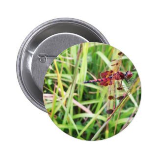 Red Dragonfly Pinback Button