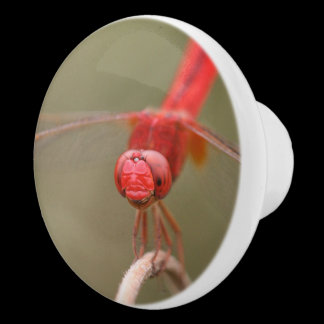 Red Dragonfly Custom Cabinet Knob /
