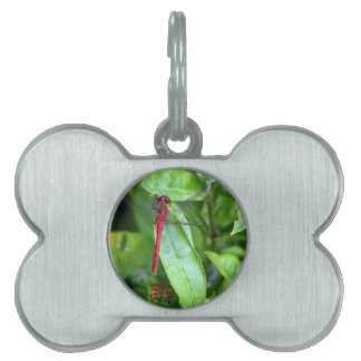 red Dragonfly Garden Pet Tag