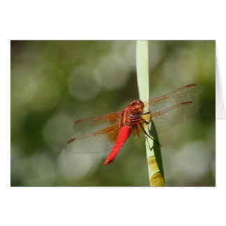 Red Dragonfly Greeting Cards