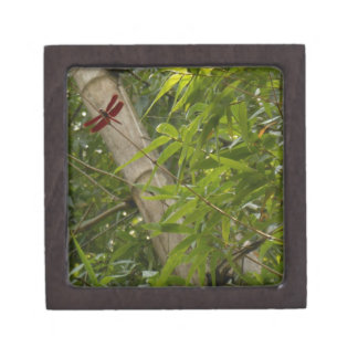 Red dragonfly in bamboo box