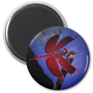 Red Dragonfly Magnet
