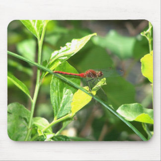 Red Dragonfly Mouse Mat