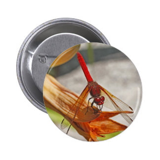 Red Dragonfly on Tiger Lily Pinback Button