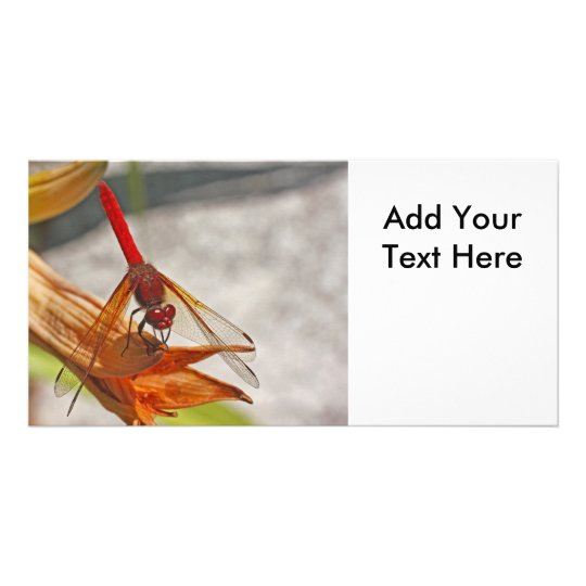 Red Dragonfly on Tiger Lily Card