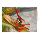 Red Dragonfly on Tiger Lily Cards