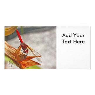 Red Dragonfly on Tiger Lily Photo Card