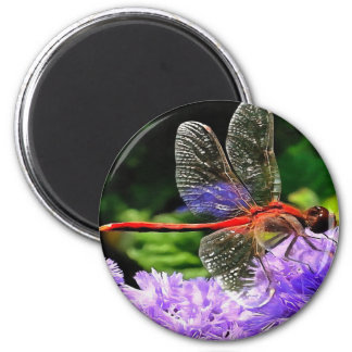Red Dragonfly on Violet Purple Flowers Magnet