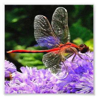 Red Dragonfly on Violet Purple Flowers Photo Print