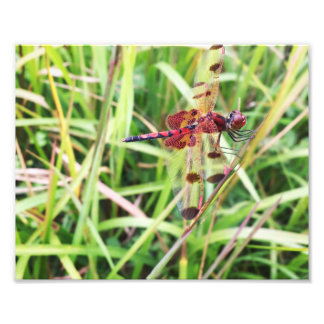 Red Dragonfly Photo Print