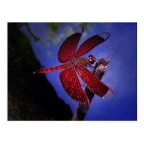 Red Dragonfly Postcard