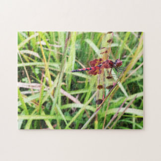 Red Dragonfly Puzzles