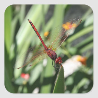 Red Dragonfly Square Sticker