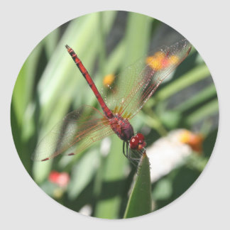 Red Dragonfly Stickers