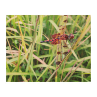 Red Dragonfly Wood Wall Art