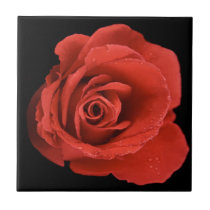 Red Drama Rose Ceramic Tile