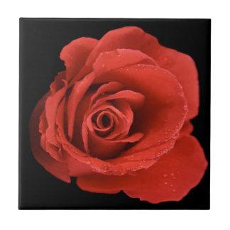 Red Drama Rose Ceramic Tile