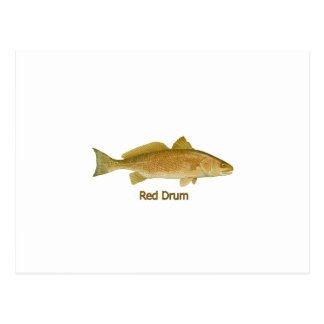 Red Drum (titled) Postcard