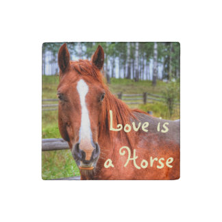 Red Dun Horse Horse-lovers Equine Photo Stone Magnet