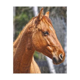 Red Dun Stallion Horse-lover's Equine Photo Print Canvas Prints