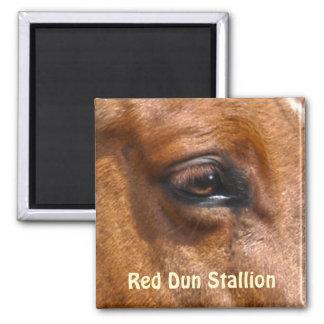 Red Dun Stallion Horse's Eye Equine Photo Magnet