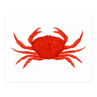 Red Dungeness Crab Logo Postcard