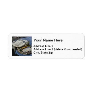 Red-eared Slider Custom Return Address Label