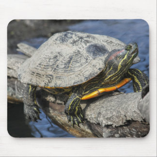 Red-eared Slider Mouse Pad